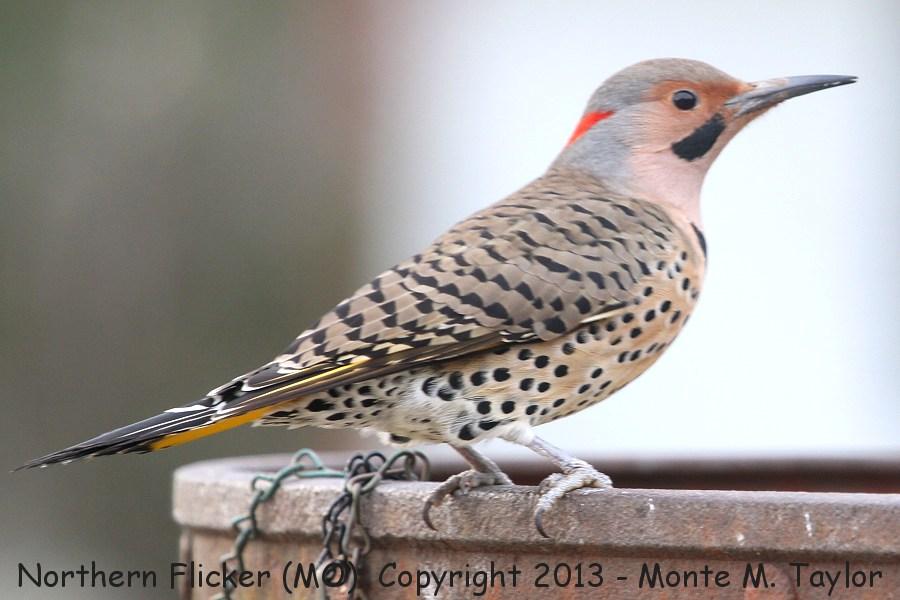 Yellow flicker bird - photo#26