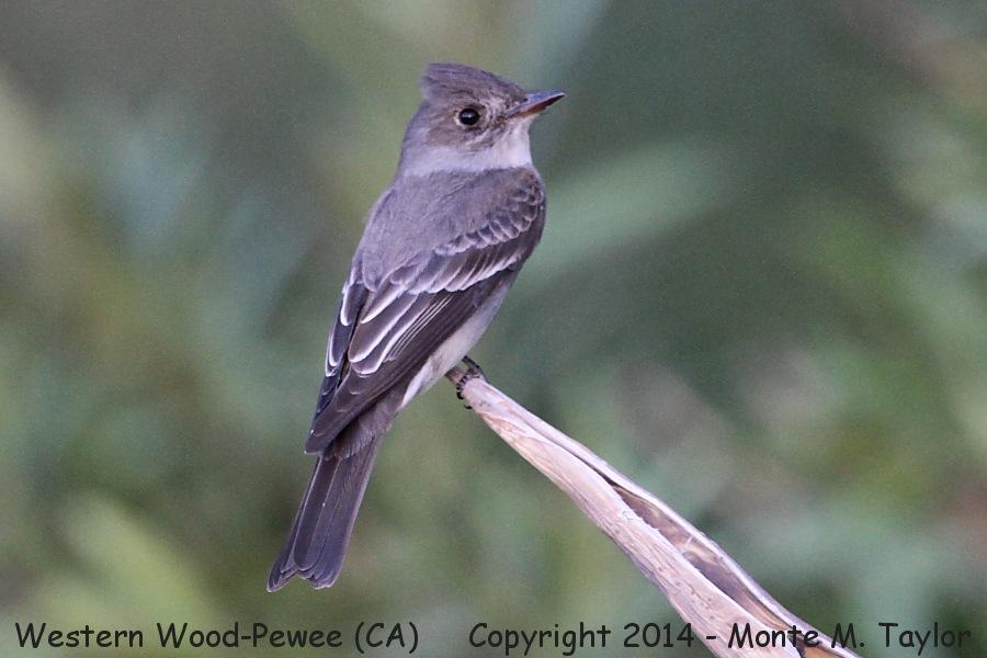 List of birds of Yellowstone National Park  Wikipedia