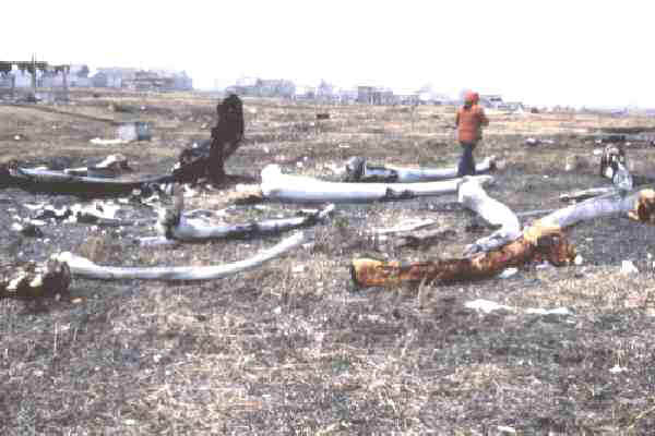 Remains of Whale bones from past hunts
