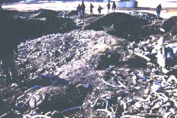 The 'boneyards' where bones of the remains of whales, etc. are discarded