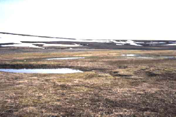 Tundra landscape scattered with small pools from melting snow